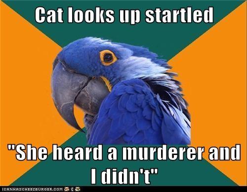 birds,Cats,Memes,murderers,noises,paranoid,Paranoid Parrot,parrots,sounds