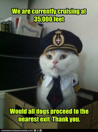 Captain Kitteh,captains,Cats,Death,dogs,exits,flying altitude,Memes,pilots,planes,sky