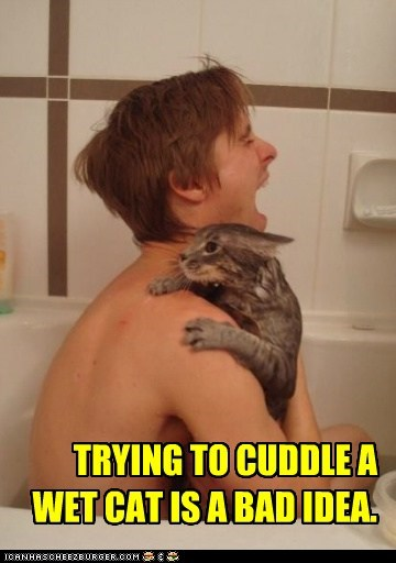 back,bad idea,bad ideas,bath,baths,captions,Cats,claws,cuddle,hurt,lolcats,ouch,pain,wet