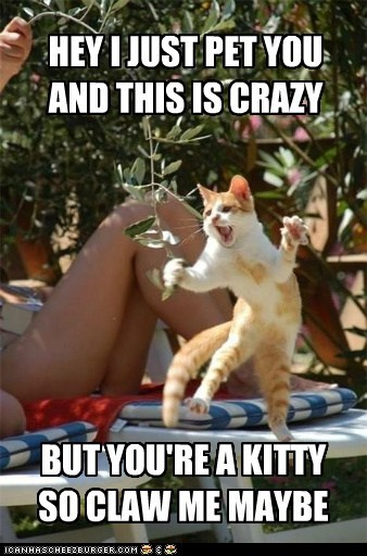 Lolcats: HEY I JUST PET YOU AND THIS IS CRAZY