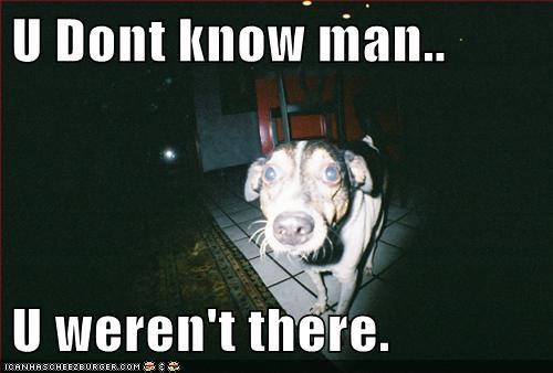 dogs,drama,flash back,ptsd,shadow,what breed