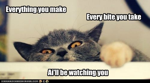 Lolcats: Ai gotz mai eyes on u & mai paw redi
