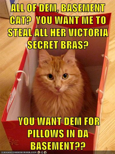 ALL OF DEM, BASEMENT CAT?  YOU WANT ME TO STEAL ALL HER VICTORIA SECRET BRAS?   YOU WANT DEM FOR PILLOWS IN DA BASEMENT??