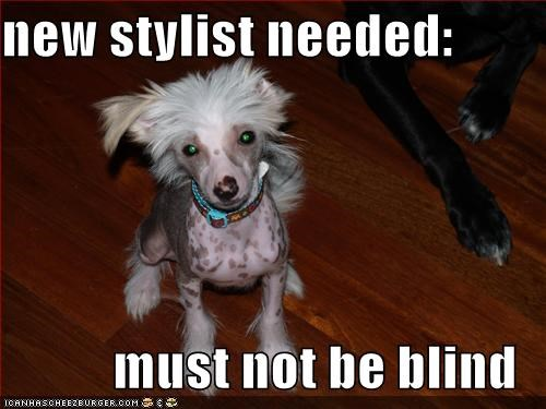 new stylist needed:  must not be blind