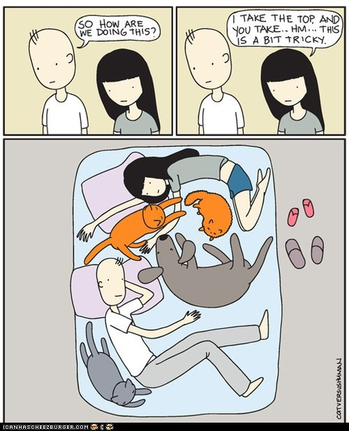 annoying,beds,cat versus human,Cats,comic,comics,dogs,in the way,sleeping