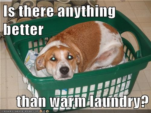 Is there anything better  than warm laundry?