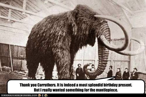 gift,mammoth,preserved,wooly mammoth