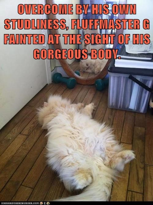 Lolcats: OVERCOME BY HIS OWN STUDLINESS
