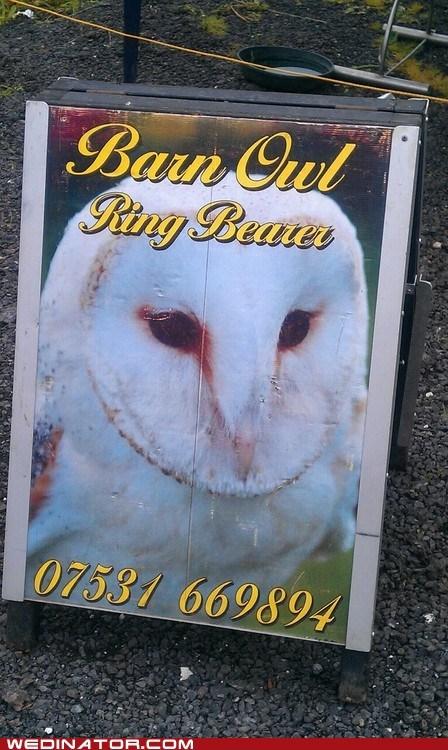 animals,funny wedding photos,owls,ringbearer,wedding rings