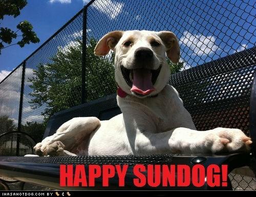 dogs,happy sundog,sunday,Sundog,what breed