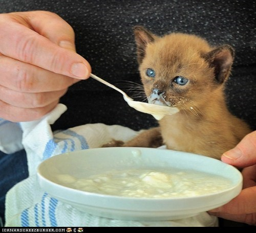 Cyoot Kitteh of teh Day: Slurp du Jour