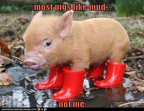 Clean Piggy
