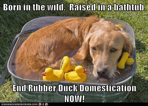 Born in the wild.  Raised in a bathtub.  End Rubber Duck Domestication NOW!