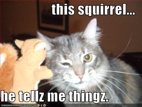 this squirrel...  he tellz me thingz.