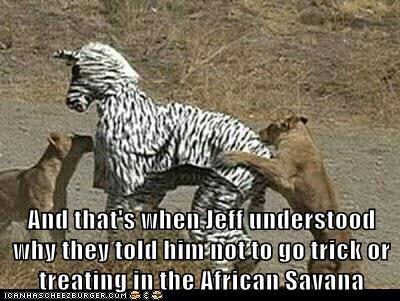 bad idea,costume,eating,hunting,lions,understood,zebra