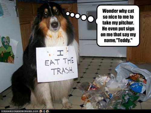 border collie,cat,dogs,lied,sign,trash