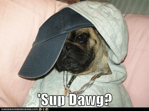 'Sup Dawg?