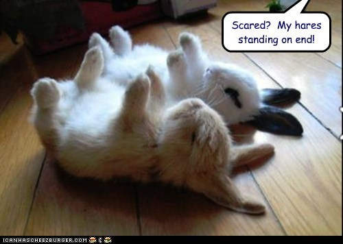 Scared?  My hares standing on end!