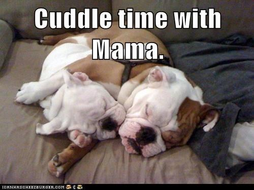 baby,best of the week,bulldog,cuddle,dogs,Hall of Fame,mommy,sleeping