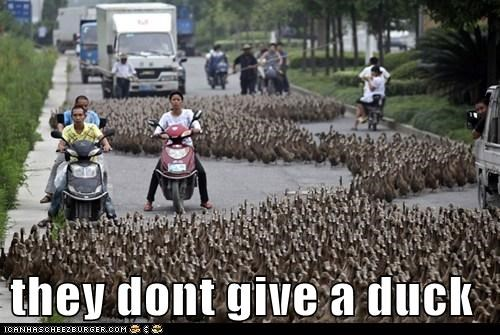 they dont give a duck