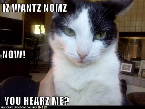 IZ WANTZ NOMZ NOW!  YOU HEARZ ME?