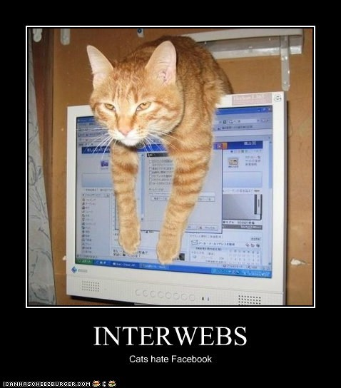 INTERWEBS