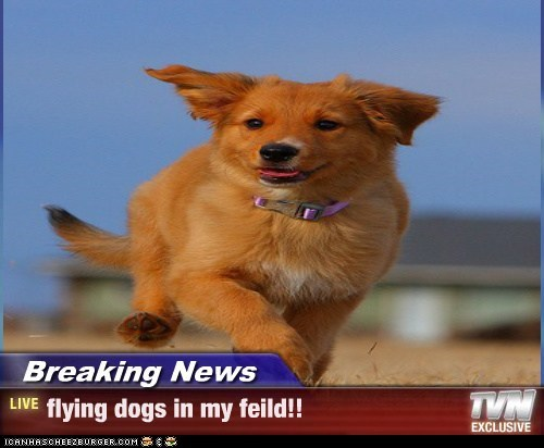 Breaking News - flying dogs in my feild!!