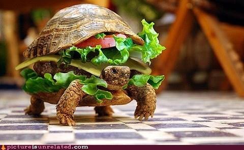 cheeseburger,shopped pixels,turtle,wtf
