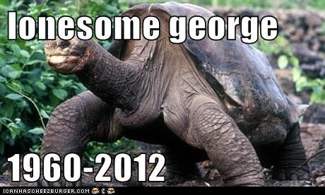 lonesome george   1960-2012