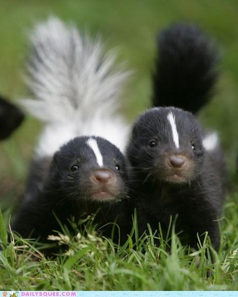 baby,siblings,skunk,skunks,squee,squee spree,tail,winner
