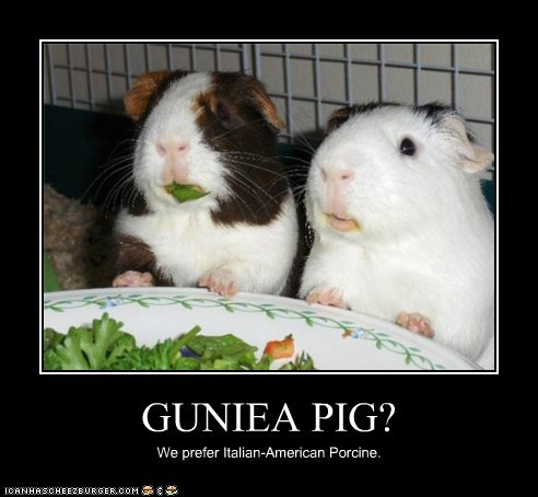 eating,guinea pig,insulted,italian,lettuce,offensive,politically correct