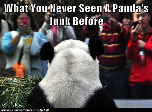 panda,political pictures