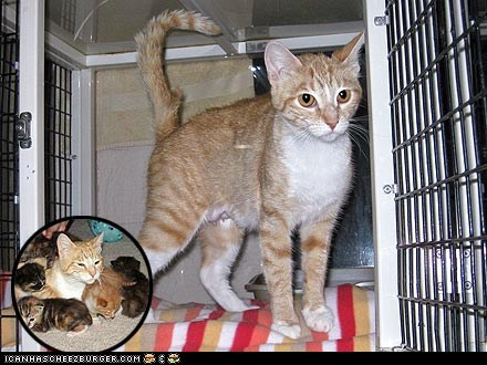 Around the Interwebs: Injured Cat Faithfully Watches Over Kittens