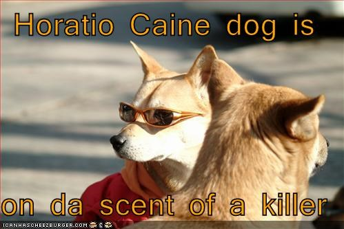Horatio Caine dog is  on da scent of a killer