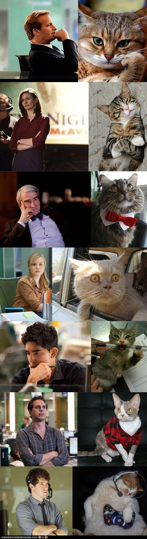 "The Cast of ""The Newsroom"" as Portrayed by Cats"