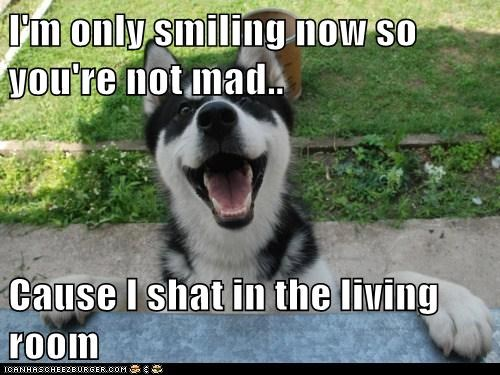 I'm only smiling now so you're not mad..  Cause I shat in the living room
