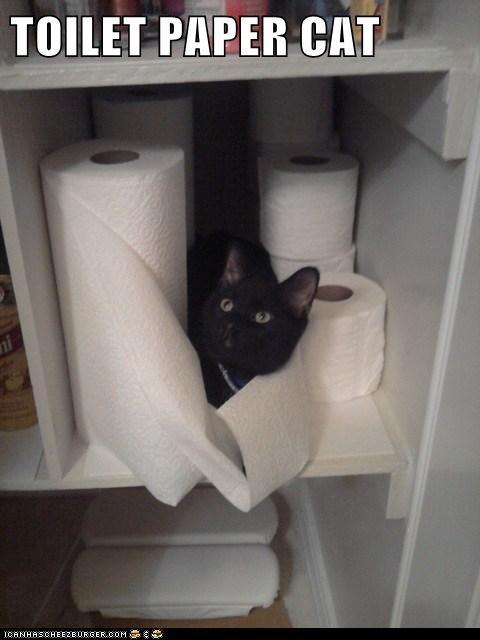 TOILET PAPER CAT