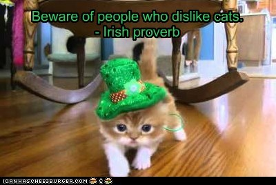 Beware of people who dislike cats. - Irish proverb