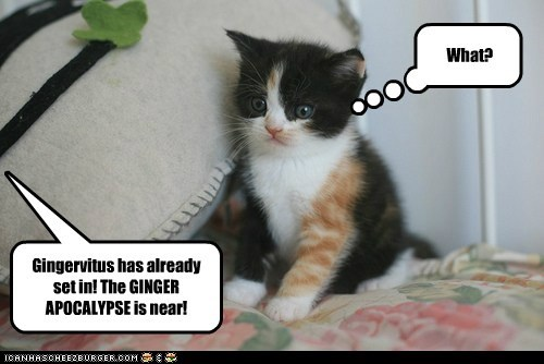 Gingervitus has already set in. The Ginger Apocalypse is near!