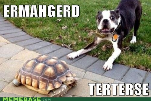 derp,goggie,pug,shell,tortise