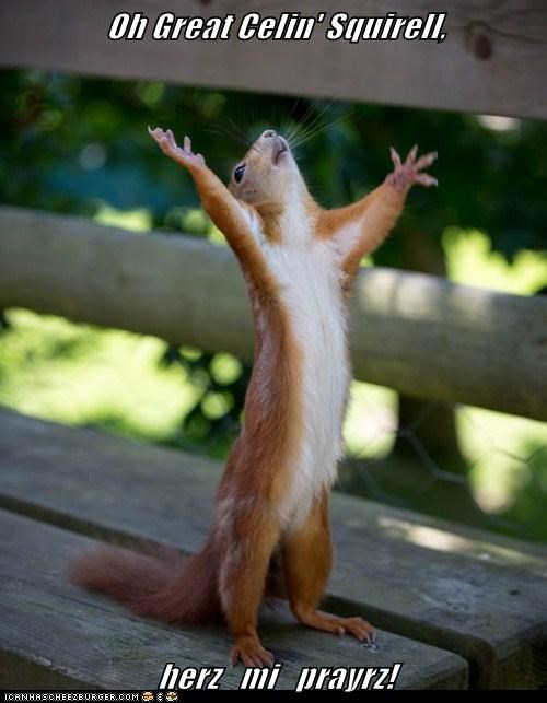 Oh Great Celin' Squirell,  herz   mi   prayrz!