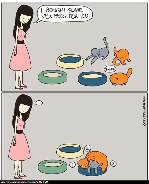 annoying,beds,cat beds,cat versus human,Cats,comic,comics,pile