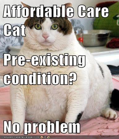 Affordable Care Cat Pre-existing condition? No problem