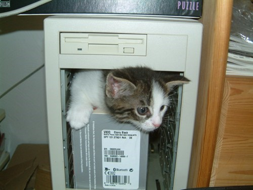 Even Computers Love Cats of the Day