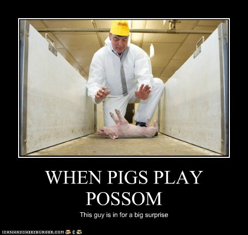 WHEN PIGS PLAY POSSOM