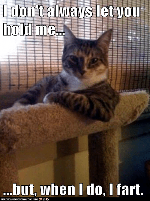 Animal Memes: The Most Interesting Cat in the World - Right In Your Face