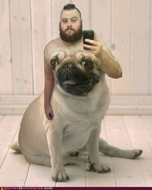best of week,fantastic,pug,shopped pixels,they said i could be anyt,they said i could be anything,wtf