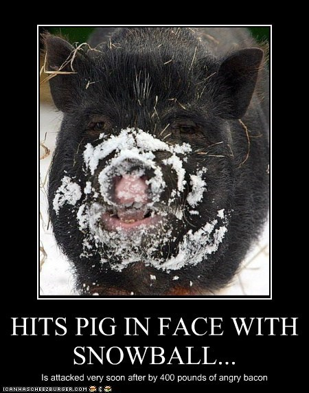 HITS PIG IN FACE WITH SNOWBALL...
