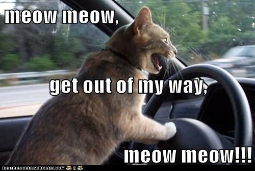 meow meow, get out of my way, meow meow!!!