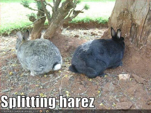 Splitting harez